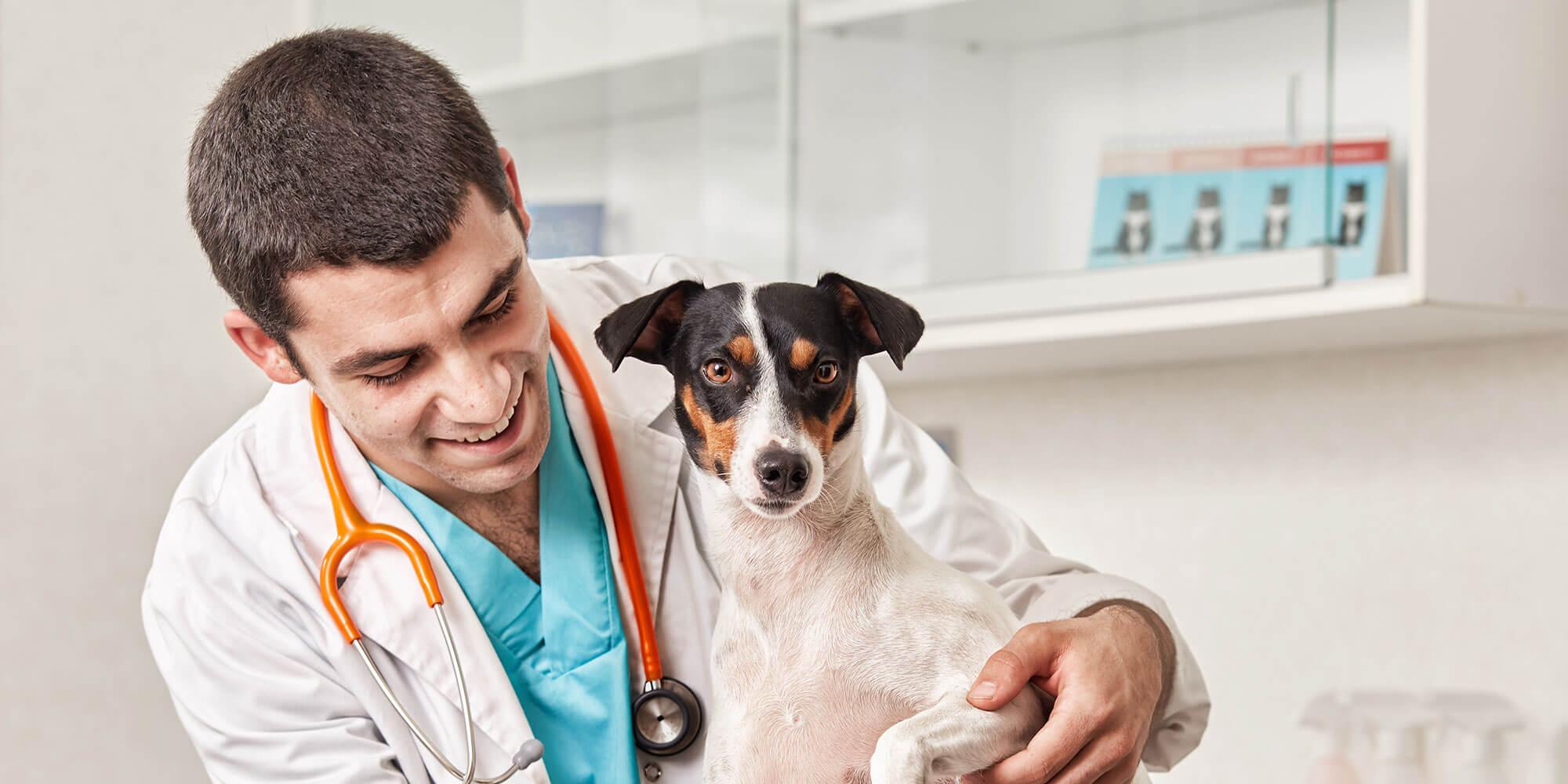 gastroenteritis hemorragica en perros es mortal